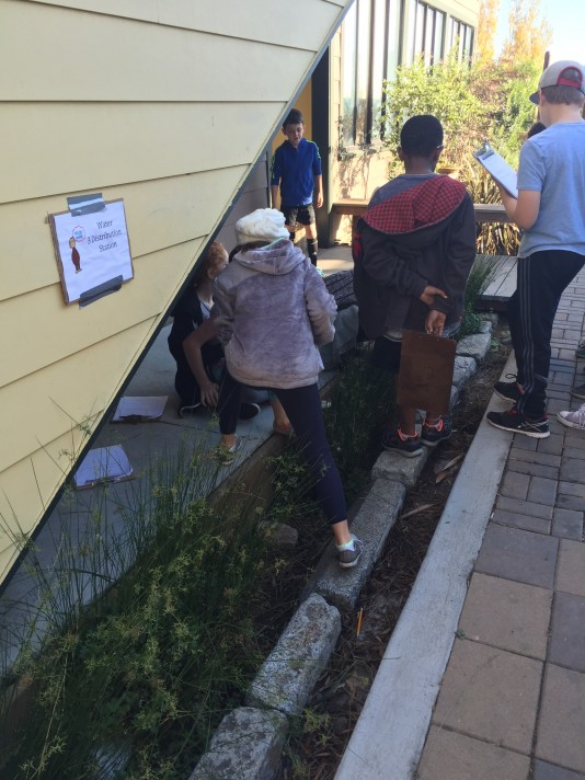 Fourth Graders learn about the rainwater garden as part of a Stewardship design thinking project.